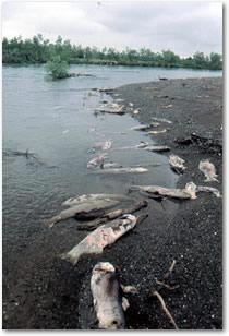 dead_dogs